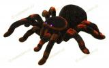 RC Tarantula (pavouk tarantule)